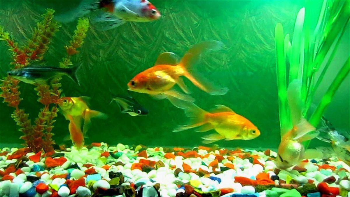 Conseils de nourriture poisson aquarium