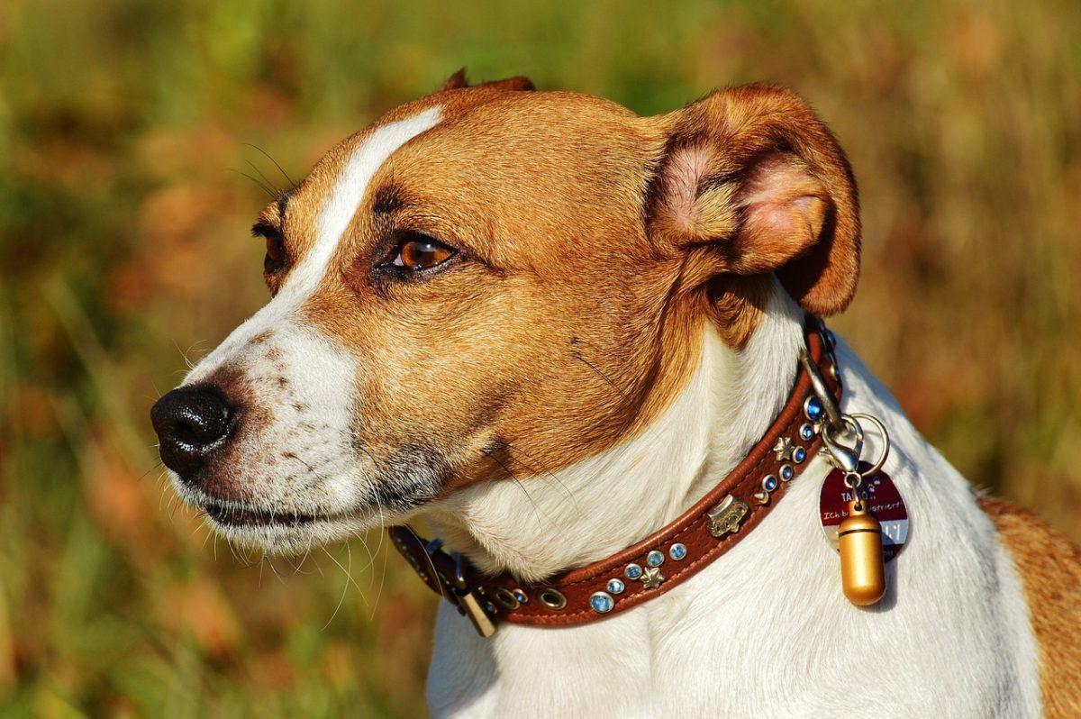 Mon chien s'est fait mal: quels sont les premiers gestes?