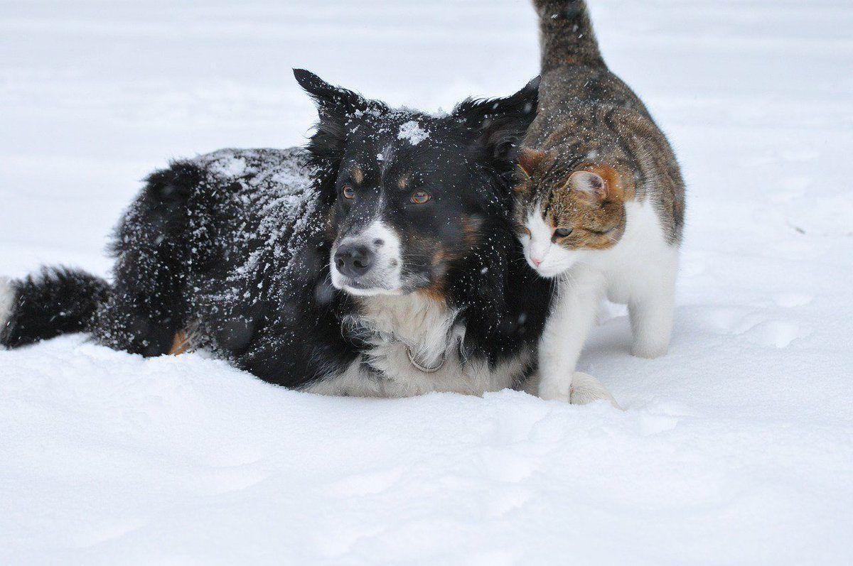 Bien protéger vos animaux du froid