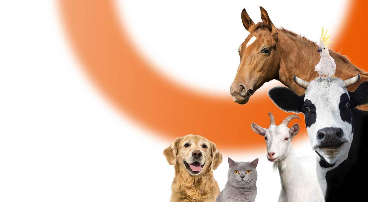 Les assurances pour animaux