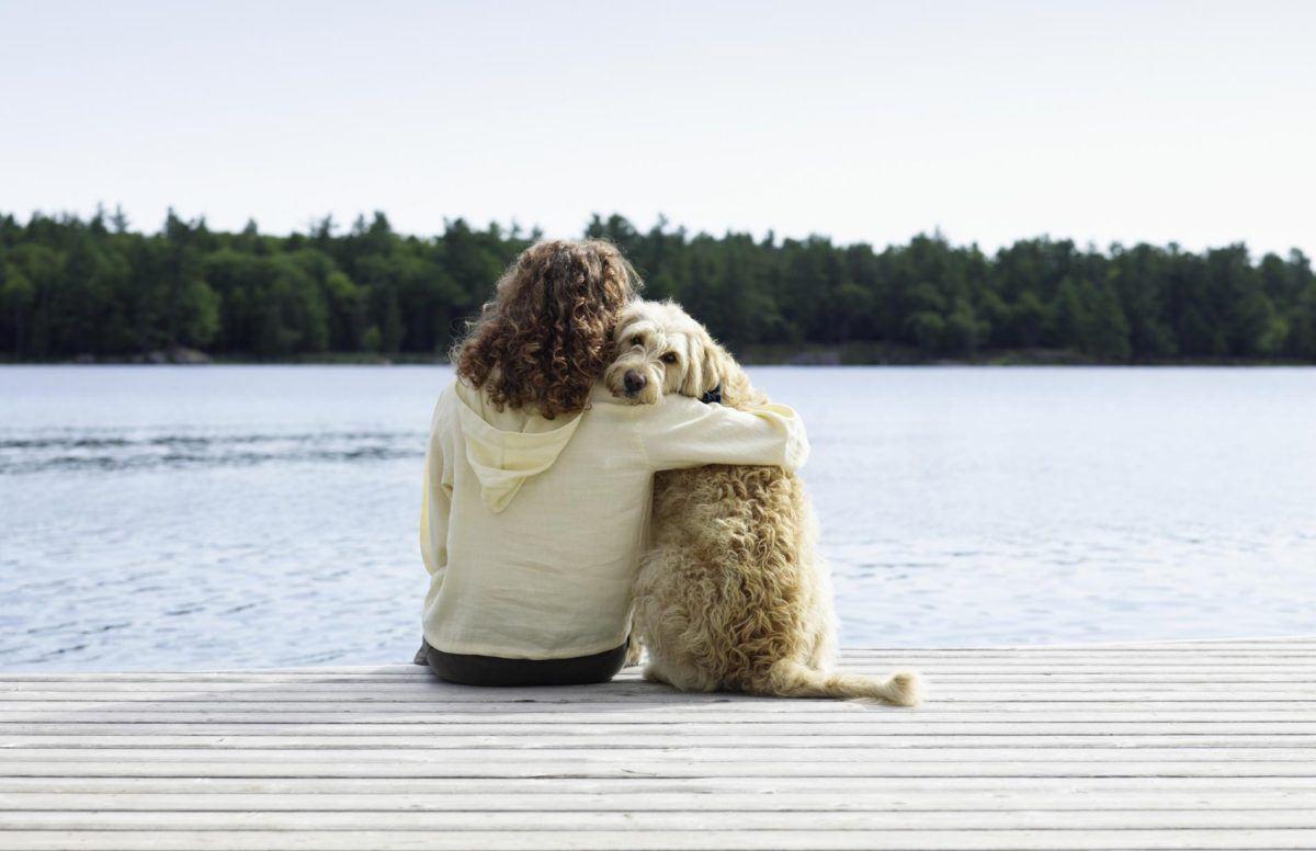 Vacances hiver: partir en vacances avec ou sans son animal